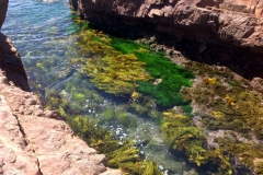 Rockpools at Tomoree National Park