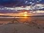 Wildlife & Nature At Stockton Sand Dunes